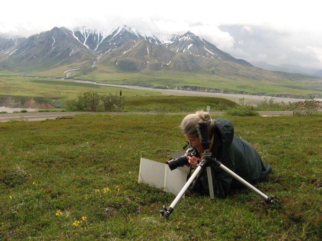 Kim at work Denali N P., Alaska