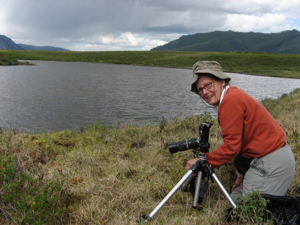 V. epipsila ssp repens (Yukon Terr, Canada June 2010)